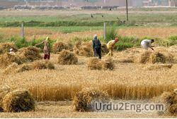 agriculture Urdu Meaning