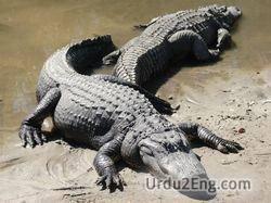 alligator Urdu Meaning