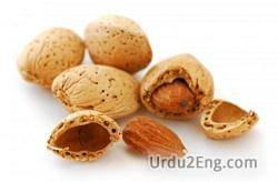 almond Urdu Meaning