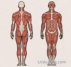 anatomy Urdu Meaning