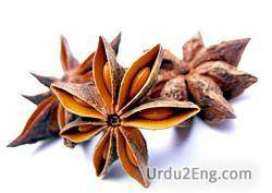 anise Urdu Meaning