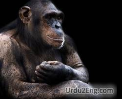 ape Urdu Meaning