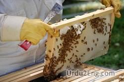 apiculture Urdu Meaning