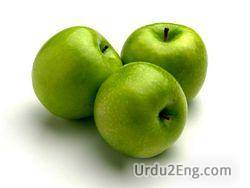 apple Urdu Meaning
