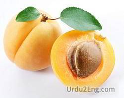 apricot Urdu Meaning