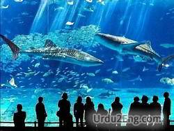 aquarium Urdu Meaning