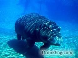 aquatic Urdu Meaning