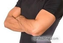 arm Urdu Meaning