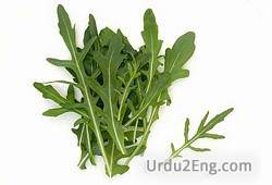 arugula Urdu Meaning