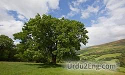 ash Urdu Meaning