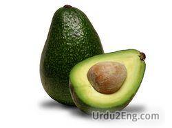 avocado Urdu Meaning