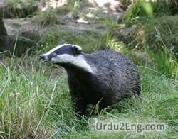 badger Urdu Meaning