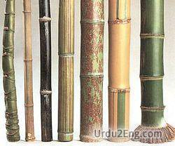 bamboo Urdu Meaning