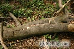 bark Urdu Meaning