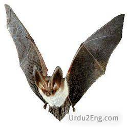 bat Urdu Meaning
