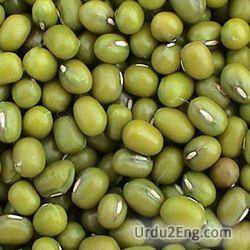 bean Urdu Meaning