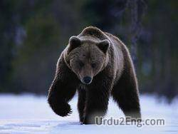 bear Urdu Meaning