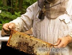 beekeeping Urdu Meaning
