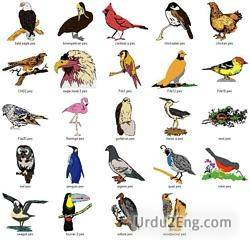 bird Urdu Meaning