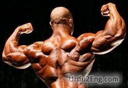 bodybuilder Urdu Meaning