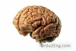 brain Urdu Meaning