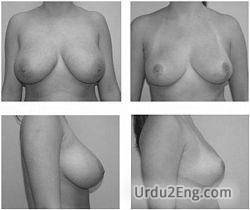 breast Urdu Meaning