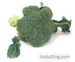 broccoli Urdu Meaning
