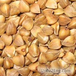 buckwheat Urdu Meaning