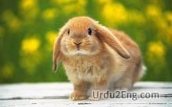 bunny Urdu Meaning