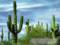 cactus Urdu Meaning
