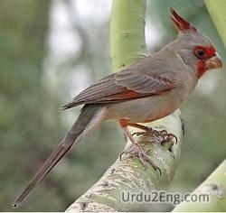 cardinal Urdu Meaning