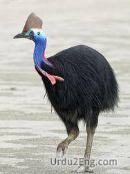 cassowary Urdu Meaning
