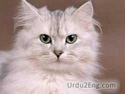cat Urdu Meaning