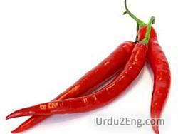 cayenne Urdu Meaning