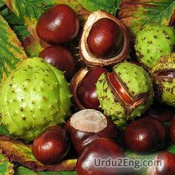 chestnut Urdu Meaning
