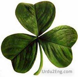 clover Urdu Meaning