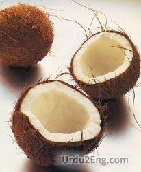 coconut Urdu Meaning