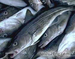 cod Urdu Meaning