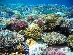coral Urdu Meaning