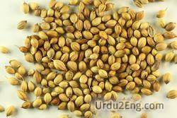 coriander Urdu Meaning