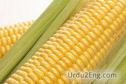 corn Urdu Meaning