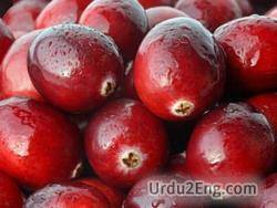 cranberry Urdu Meaning