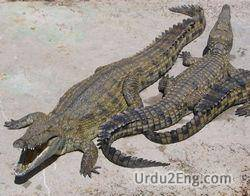 crocodile Urdu Meaning