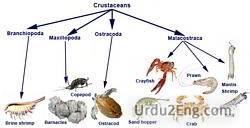 crustacean Urdu Meaning