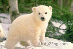 cub Urdu Meaning