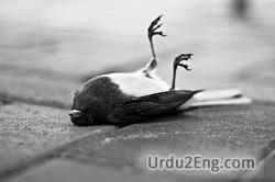 dead Urdu Meaning