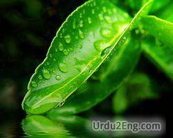 dew Urdu Meaning