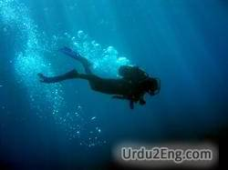 dive Urdu Meaning