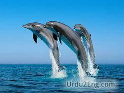 dolphin Urdu Meaning