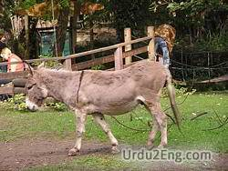 donkey Urdu Meaning